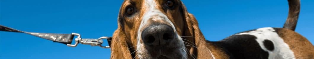 Dierenartsenpraktijk Wenters hond