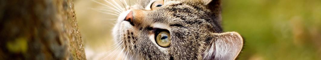 Dierenartsenpraktijk Wenters kat